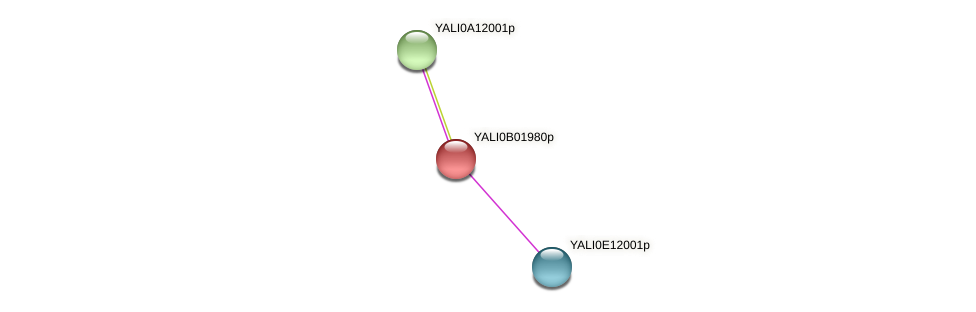 XP_500406.1 protein (Yarrowia lipolytica) - STRING interaction network