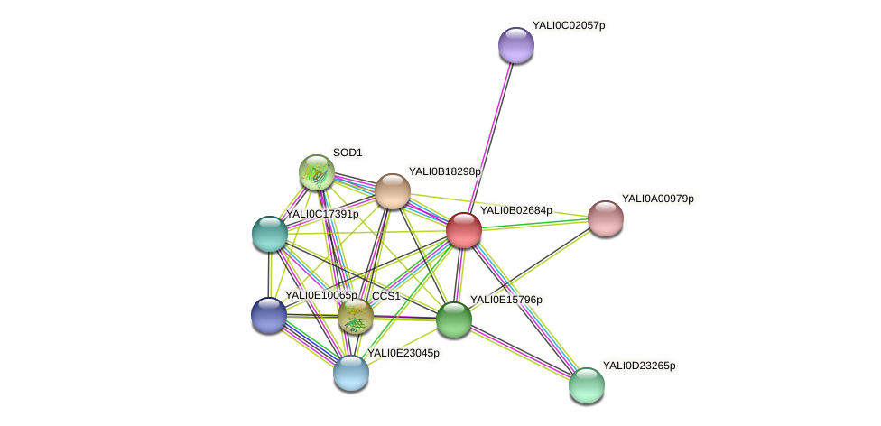 XP_500433.1 protein (Yarrowia lipolytica) - STRING interaction network