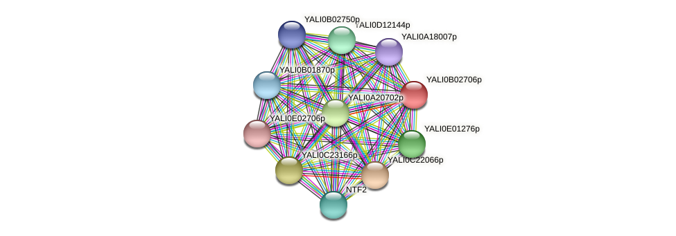 XP_500434.1 protein (Yarrowia lipolytica) - STRING interaction network