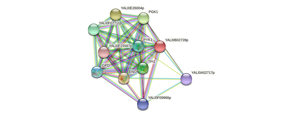 XP_500435.1 protein (Yarrowia lipolytica) - STRING interaction network
