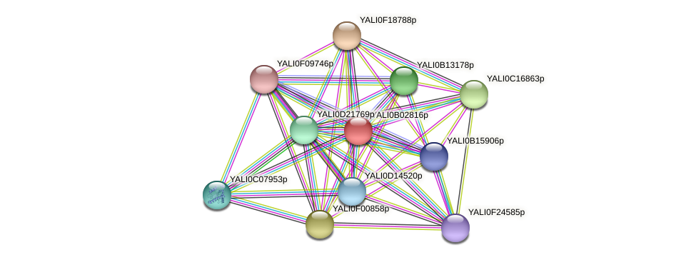 XP_500439.1 protein (Yarrowia lipolytica) - STRING interaction network