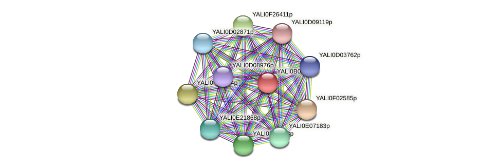 XP_500442.1 protein (Yarrowia lipolytica) - STRING interaction network