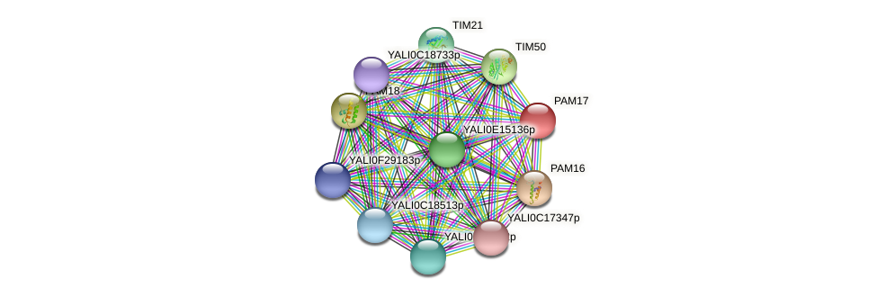 PAM17 protein (Yarrowia lipolytica) - STRING interaction network