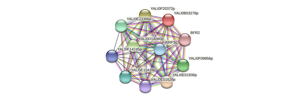 XP_500454.1 protein (Yarrowia lipolytica) - STRING interaction network
