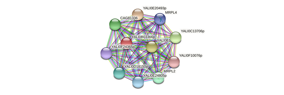 XP_500458.1 protein (Yarrowia lipolytica) - STRING interaction network