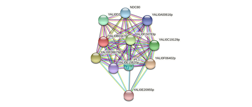 XP_500461.1 protein (Yarrowia lipolytica) - STRING interaction network