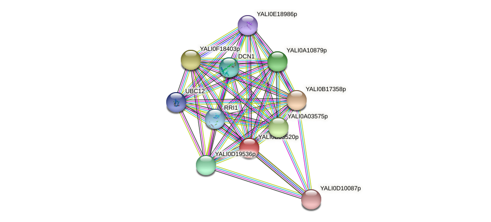 XP_500463.1 protein (Yarrowia lipolytica) - STRING interaction network