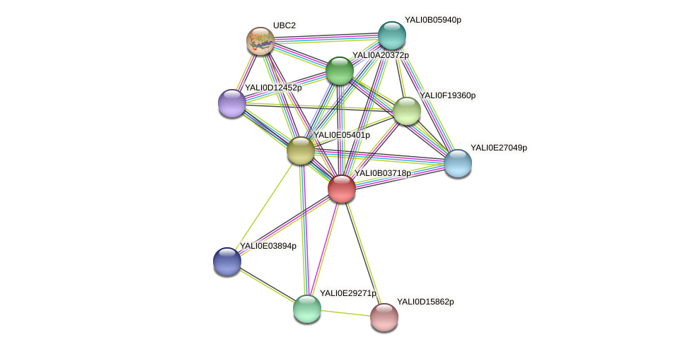 XP_500468.1 protein (Yarrowia lipolytica) - STRING interaction network