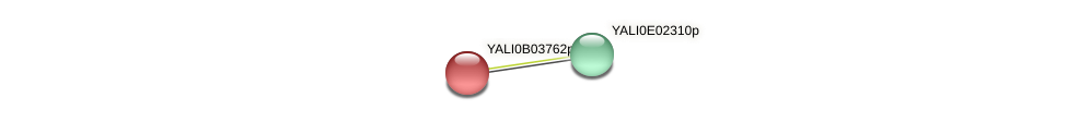 XP_500469.1 protein (Yarrowia lipolytica) - STRING interaction network