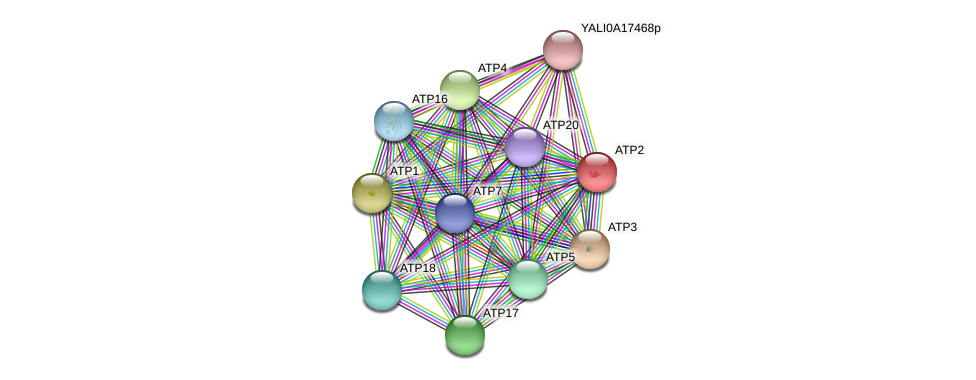 XP_500475.2 protein (Yarrowia lipolytica) - STRING interaction network