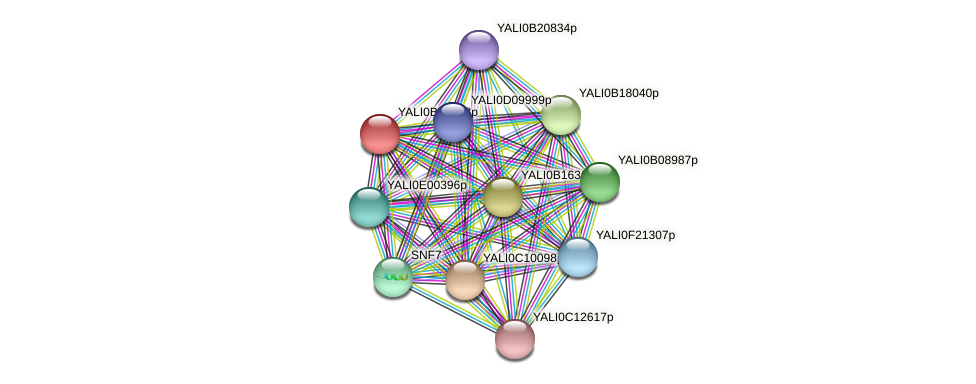 XP_500477.1 protein (Yarrowia lipolytica) - STRING interaction network