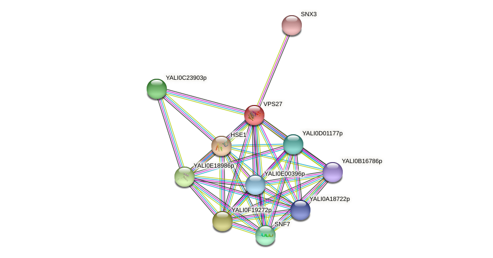 VPS27 protein (Yarrowia lipolytica) - STRING interaction network