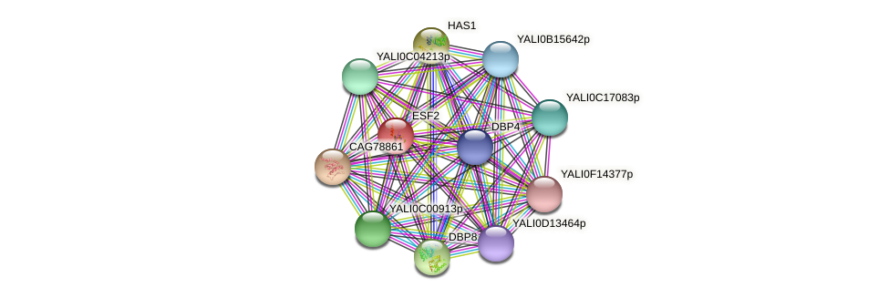 ESF2 protein (Yarrowia lipolytica) - STRING interaction network