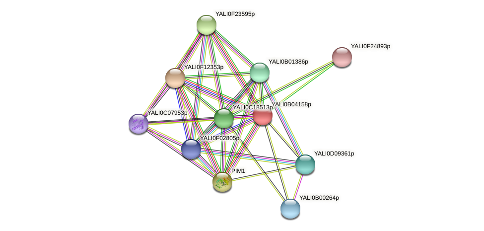 XP_500482.1 protein (Yarrowia lipolytica) - STRING interaction network