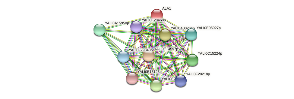 XP_500483.1 protein (Yarrowia lipolytica) - STRING interaction network