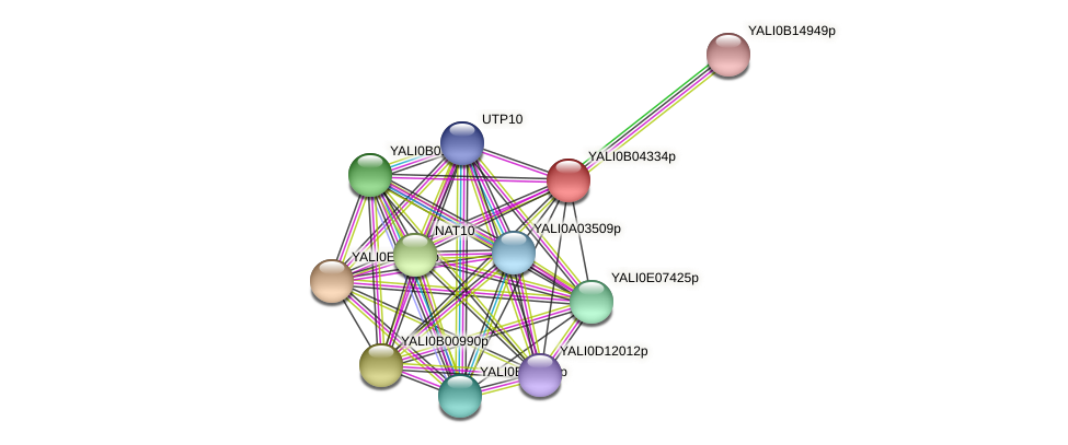 XP_500490.1 protein (Yarrowia lipolytica) - STRING interaction network