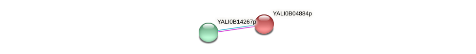 XP_500510.1 protein (Yarrowia lipolytica) - STRING interaction network