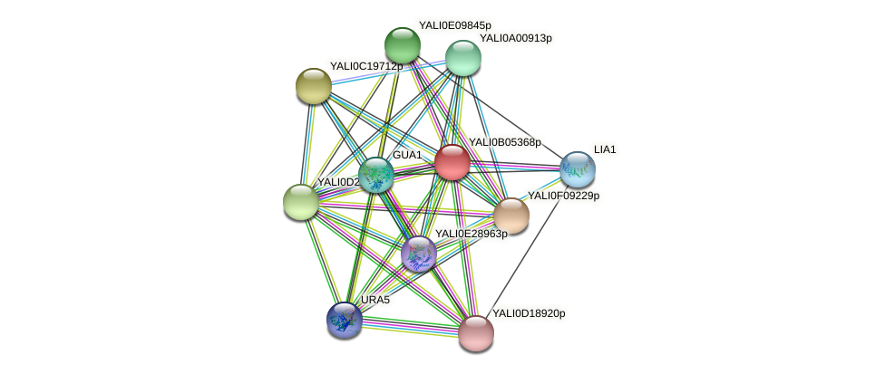 XP_500526.1 protein (Yarrowia lipolytica) - STRING interaction network