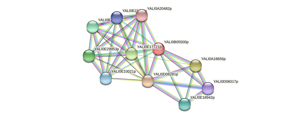 XP_500532.1 protein (Yarrowia lipolytica) - STRING interaction network