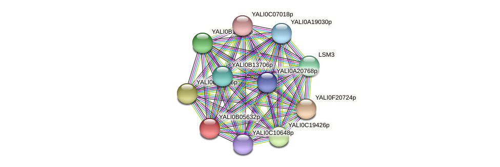 XP_500537.1 protein (Yarrowia lipolytica) - STRING interaction network