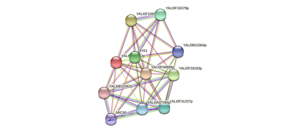 XP_500547.1 protein (Yarrowia lipolytica) - STRING interaction network