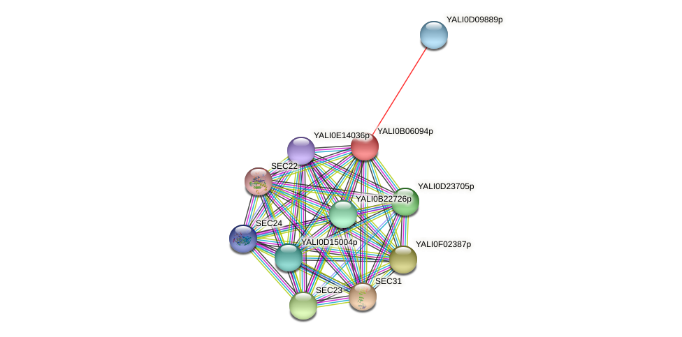 XP_500555.1 protein (Yarrowia lipolytica) - STRING interaction network