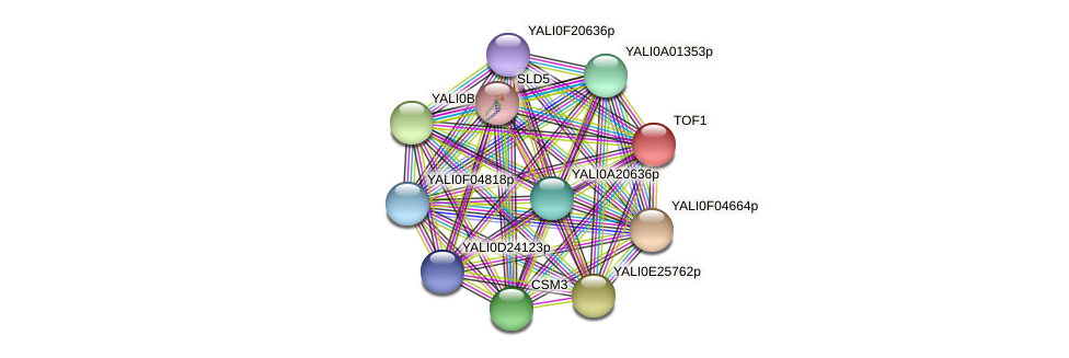 TOF1 protein (Yarrowia lipolytica) - STRING interaction network