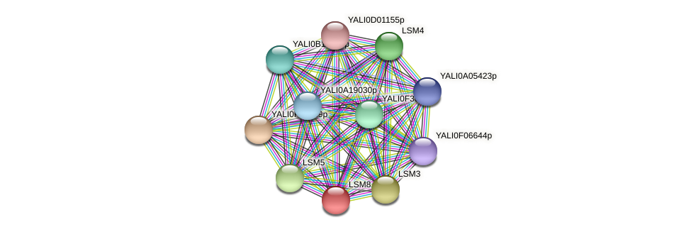 XP_500571.1 protein (Yarrowia lipolytica) - STRING interaction network