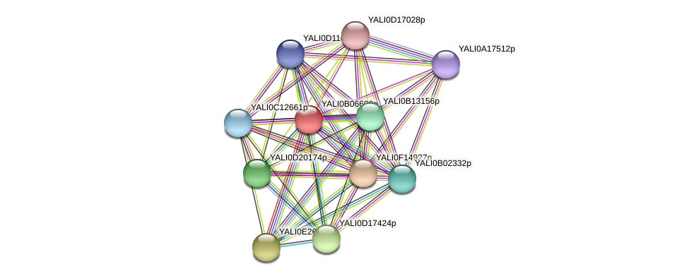 XP_500574.1 protein (Yarrowia lipolytica) - STRING interaction network