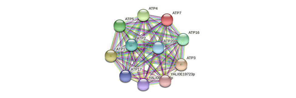 XP_500583.1 protein (Yarrowia lipolytica) - STRING interaction network