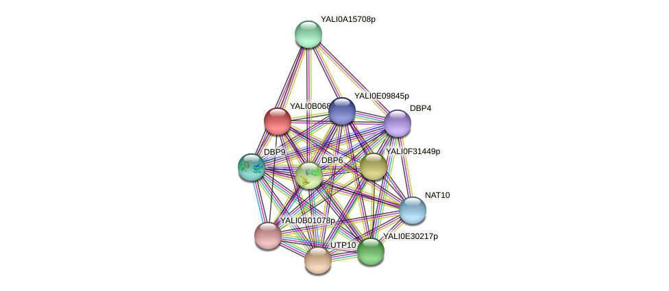 XP_500585.1 protein (Yarrowia lipolytica) - STRING interaction network