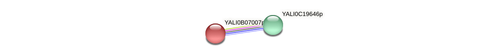 XP_500591.1 protein (Yarrowia lipolytica) - STRING interaction network