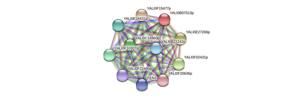 XP_500607.1 protein (Yarrowia lipolytica) - STRING interaction network