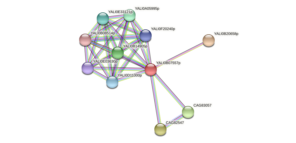 XP_500609.1 protein (Yarrowia lipolytica) - STRING interaction network
