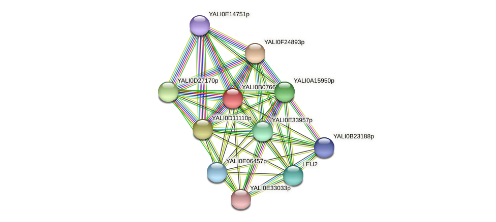 XP_500614.1 protein (Yarrowia lipolytica) - STRING interaction network