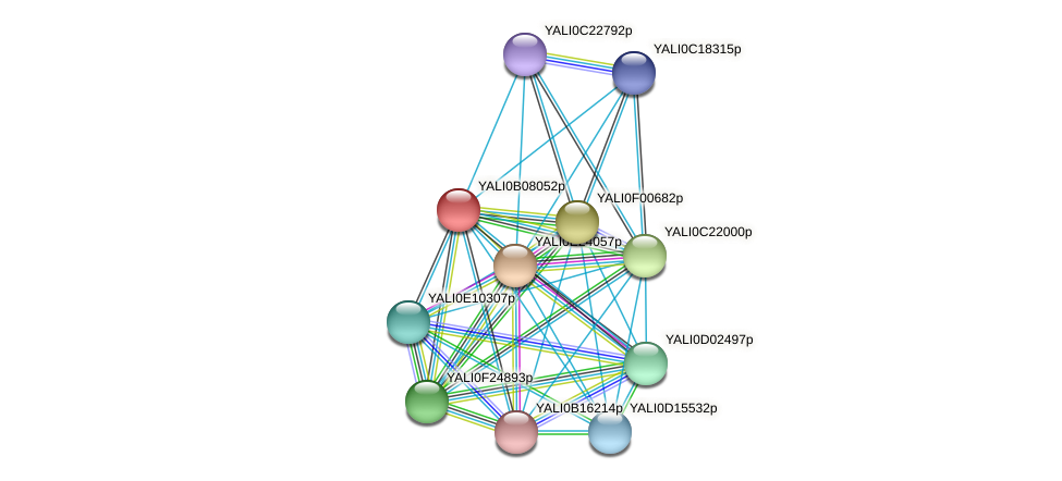 XP_500625.1 protein (Yarrowia lipolytica) - STRING interaction network