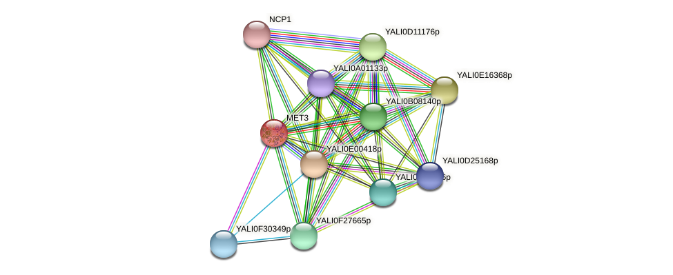 MET3 protein (Yarrowia lipolytica) - STRING interaction network