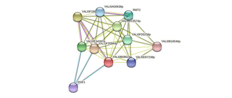 XP_500648.1 protein (Yarrowia lipolytica) - STRING interaction network