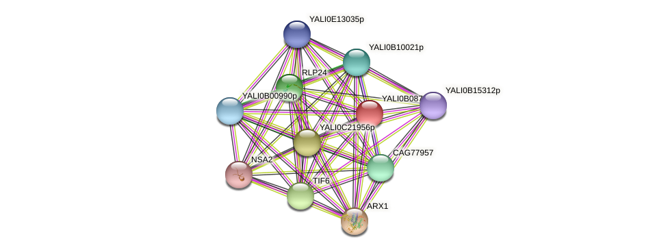 XP_500651.1 protein (Yarrowia lipolytica) - STRING interaction network