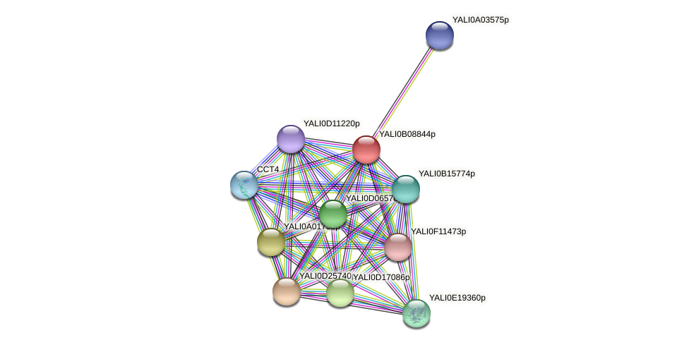 XP_500657.1 protein (Yarrowia lipolytica) - STRING interaction network