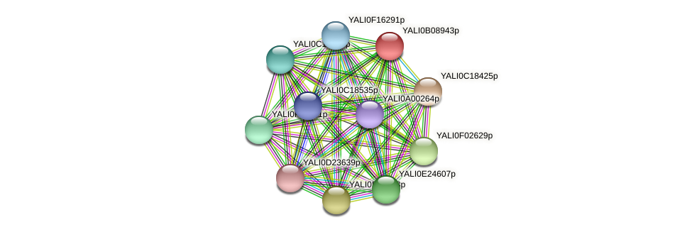 XP_500662.1 protein (Yarrowia lipolytica) - STRING interaction network