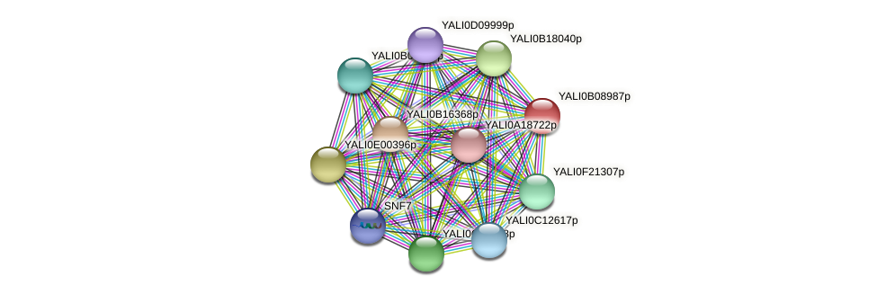 XP_500664.1 protein (Yarrowia lipolytica) - STRING interaction network