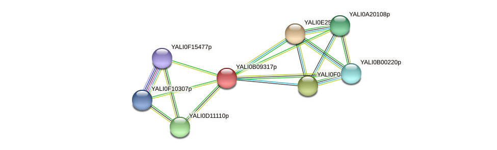 XP_500675.1 protein (Yarrowia lipolytica) - STRING interaction network