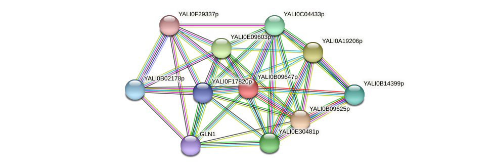 XP_500688.1 protein (Yarrowia lipolytica) - STRING interaction network