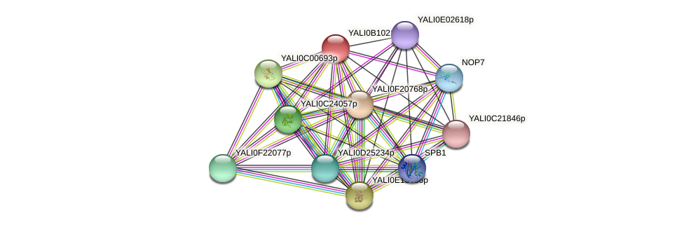 XP_500710.1 protein (Yarrowia lipolytica) - STRING interaction network
