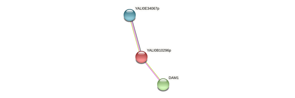 XP_500714.1 protein (Yarrowia lipolytica) - STRING interaction network