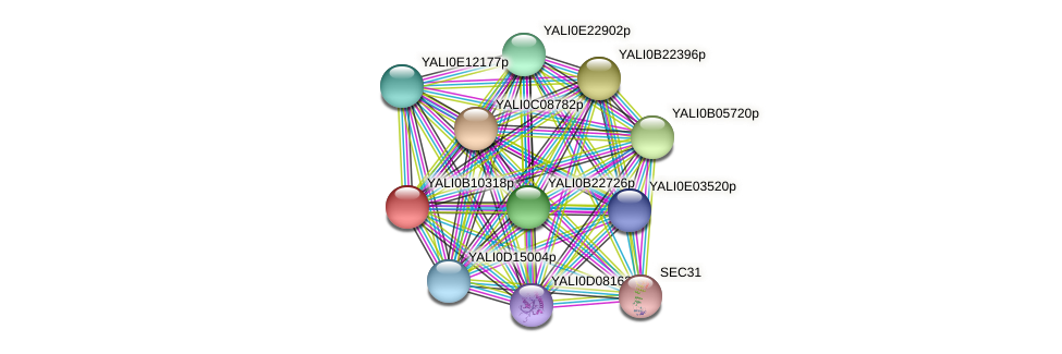 XP_500715.2 protein (Yarrowia lipolytica) - STRING interaction network
