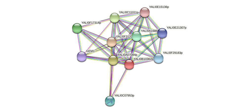 XP_500717.1 protein (Yarrowia lipolytica) - STRING interaction network