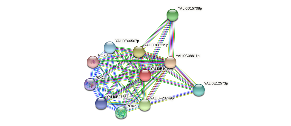 XP_500719.1 protein (Yarrowia lipolytica) - STRING interaction network
