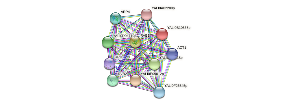 XP_500725.1 protein (Yarrowia lipolytica) - STRING interaction network